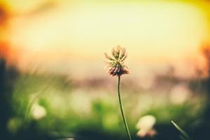 野に咲く花ri