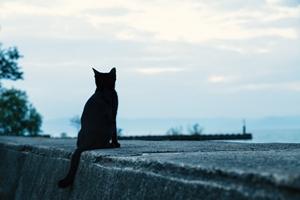 海を見る猫ri