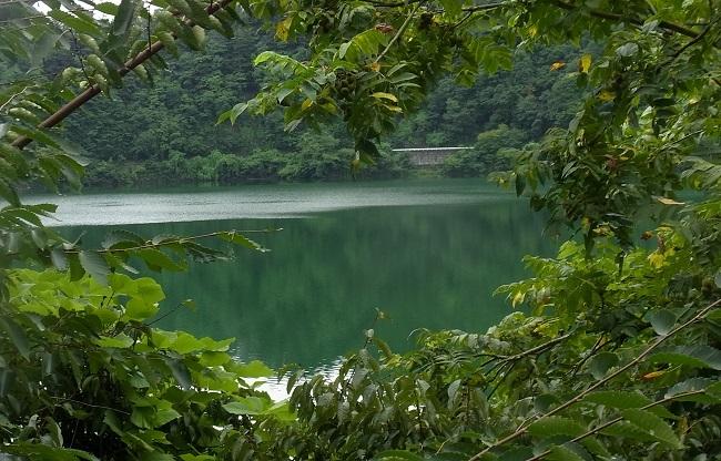 木陰越しの奥多摩湖 - 172kb