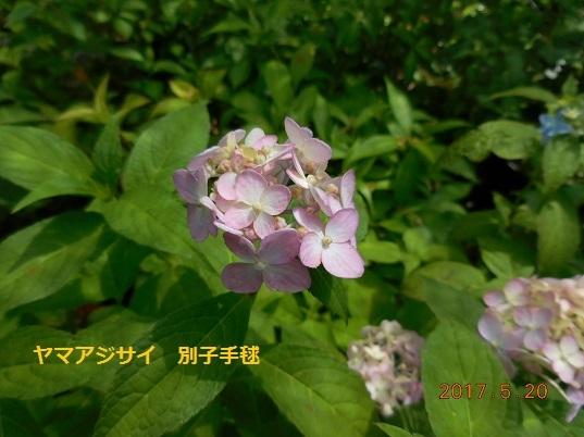 DSCN0575 - コピー