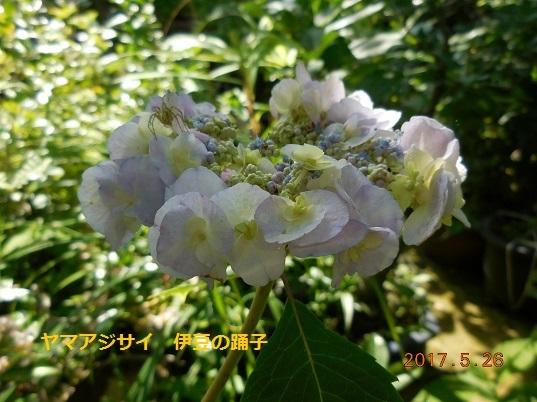DSCN0683 - コピー