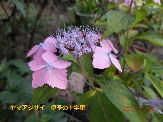DSCN0706 - コピー