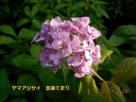 DSCN0790 - コピー