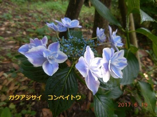 DSCN1014 - コピー