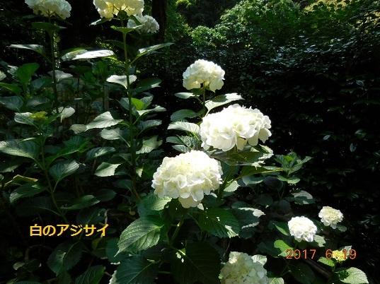 DSCN1017 - コピー