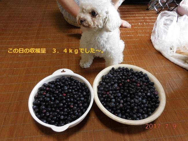 DSCN1146 - コピー