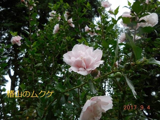 DSCN1249 - コピー
