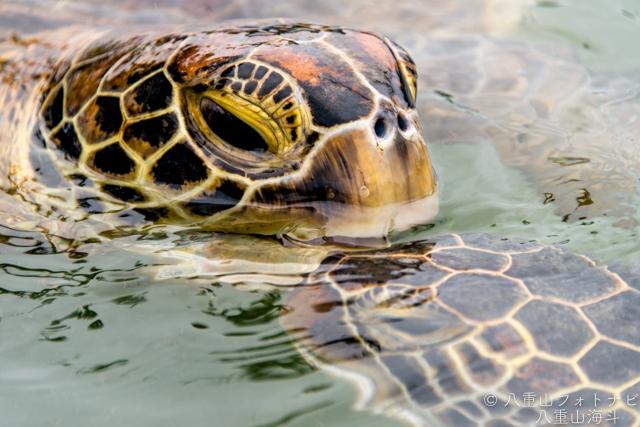 黒島研究所 ウミガメの顔