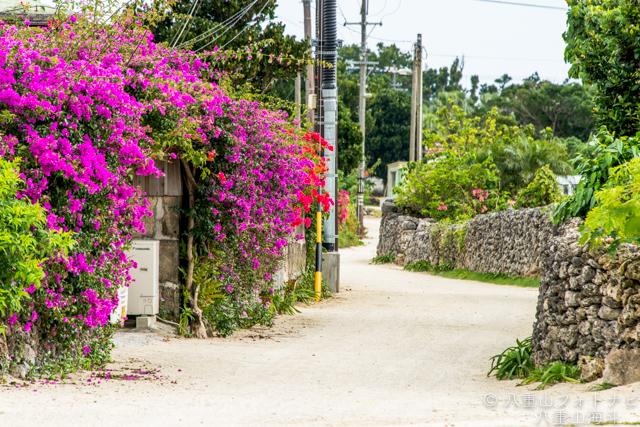 竹富島 集落散歩の写真