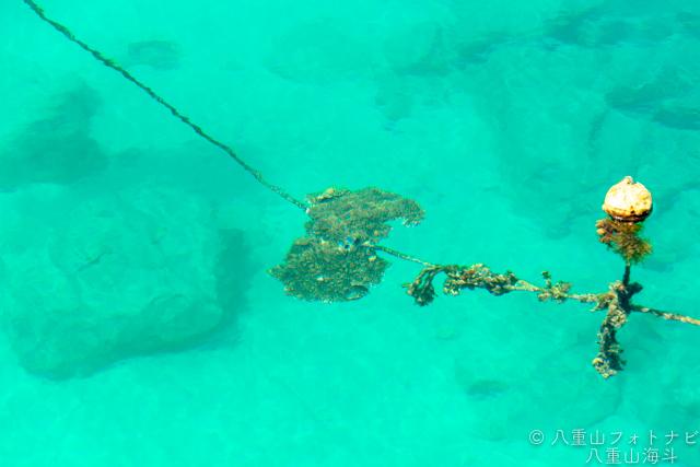 3月の波照間島 高速船乗り場付近の風景写真