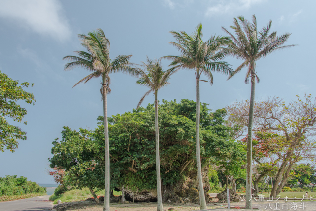 石垣島 大浜集落 崎原公園の津波大石の風景