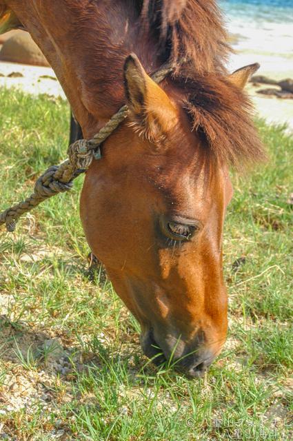 2006/5 比川の与那国馬
