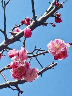 29桃の木