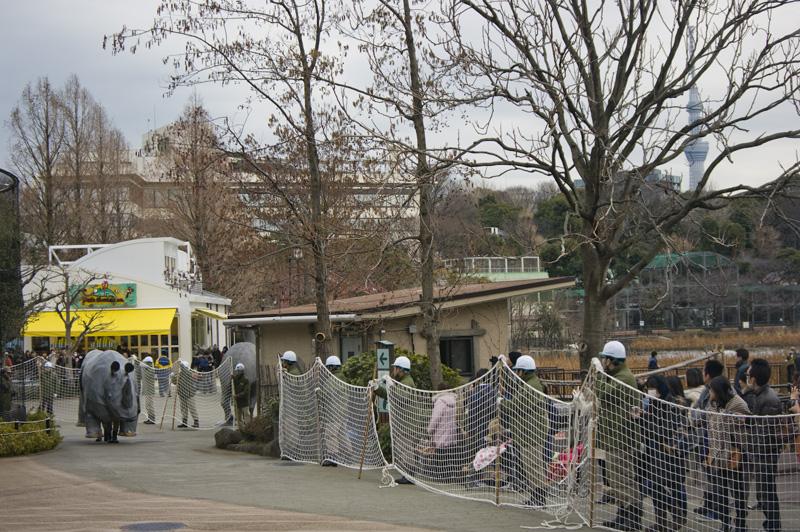 上野動物園 避難訓練 サイ