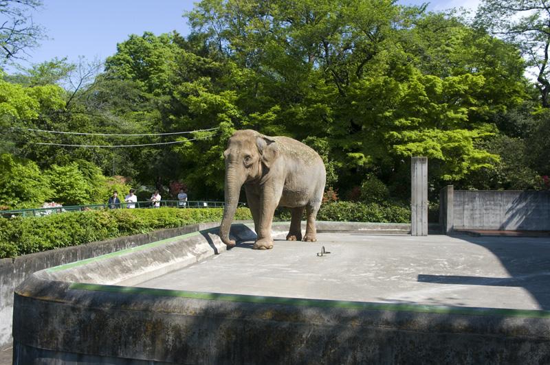 桐生が岡動物園のゾウ