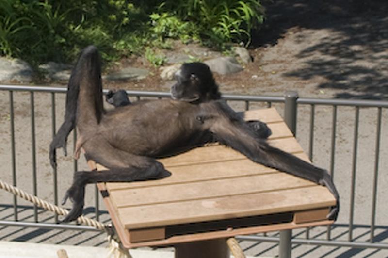 桐生が岡動物園の猿山