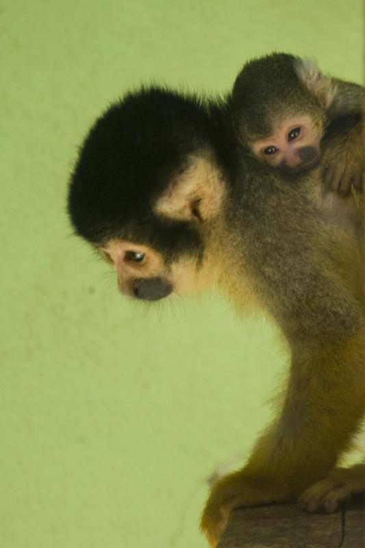 豊橋総合動植物公園の赤ちゃんサル