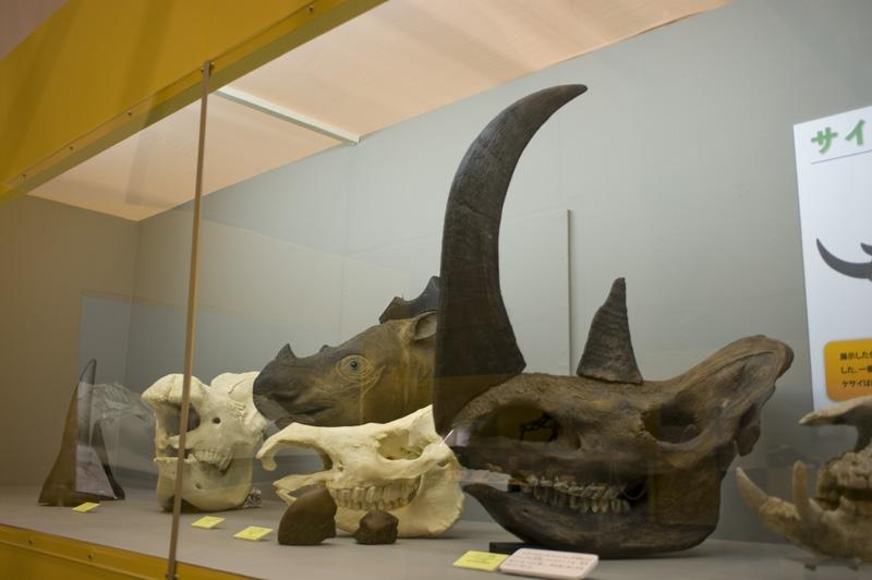 のんほいパーク自然史博物館の大きな動物