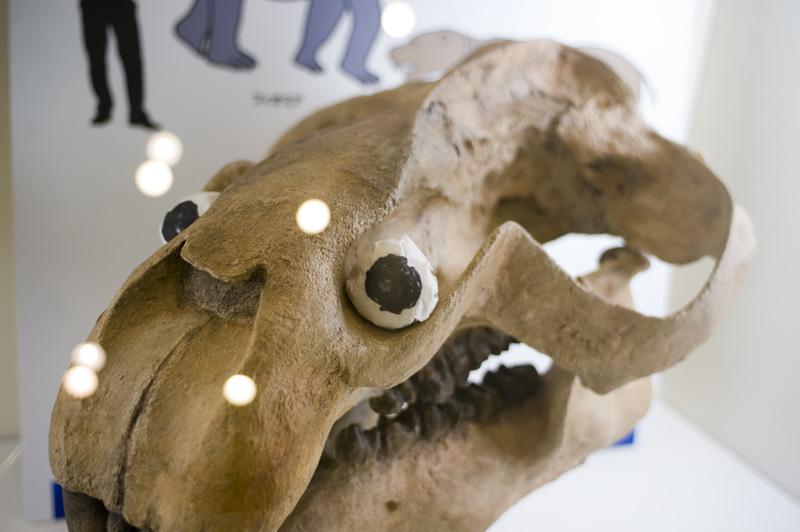 義眼 頭蓋骨 動物園