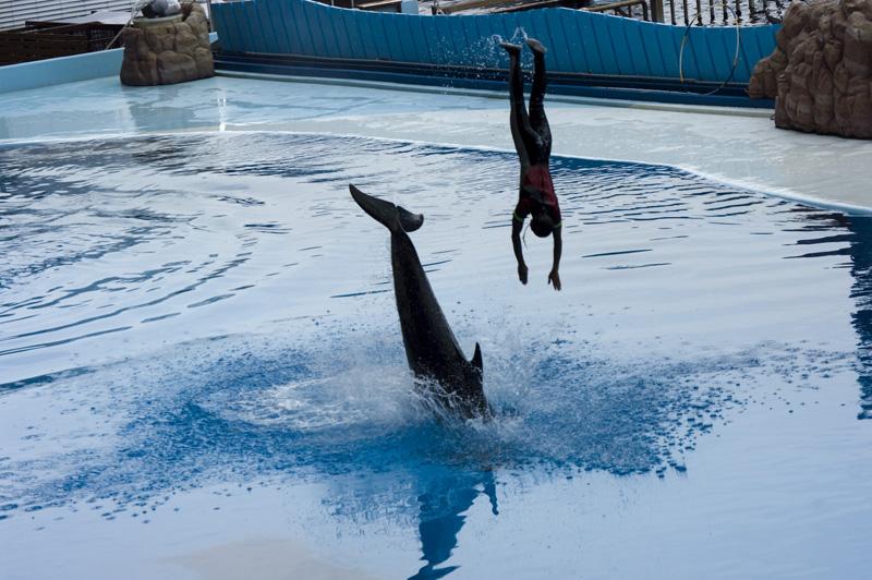 アドベンチャーワールドのイルカショー水族館