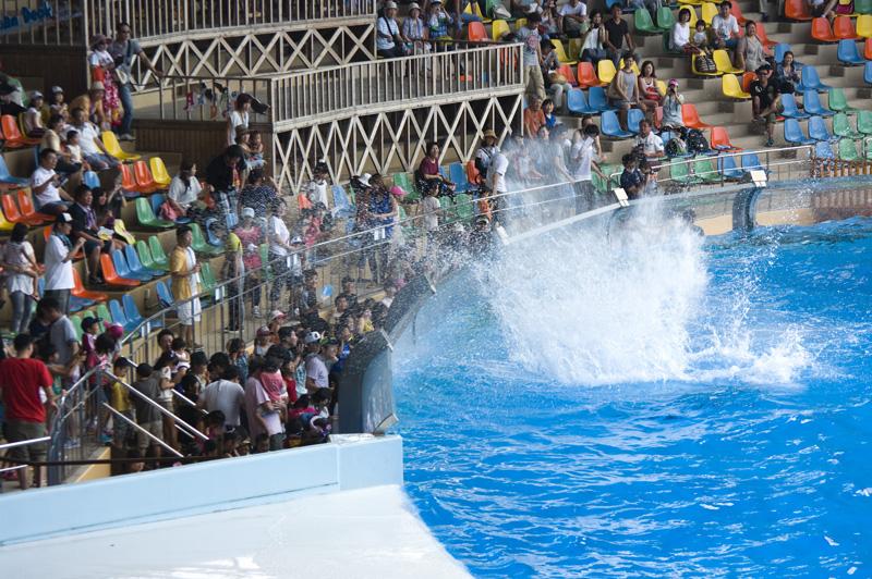南紀白浜アドベンチャーワールドのイルカショーは濡れる