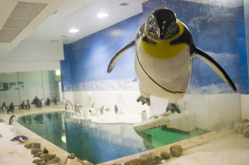 南紀白浜アドベンチャーワールドのペンギン3Dジャンプ