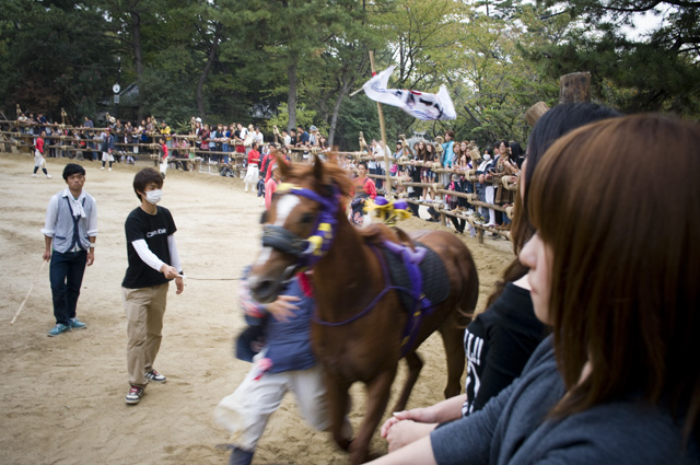 愛知県高浜市春日神社の馬が走る奇祭おまんとまつり