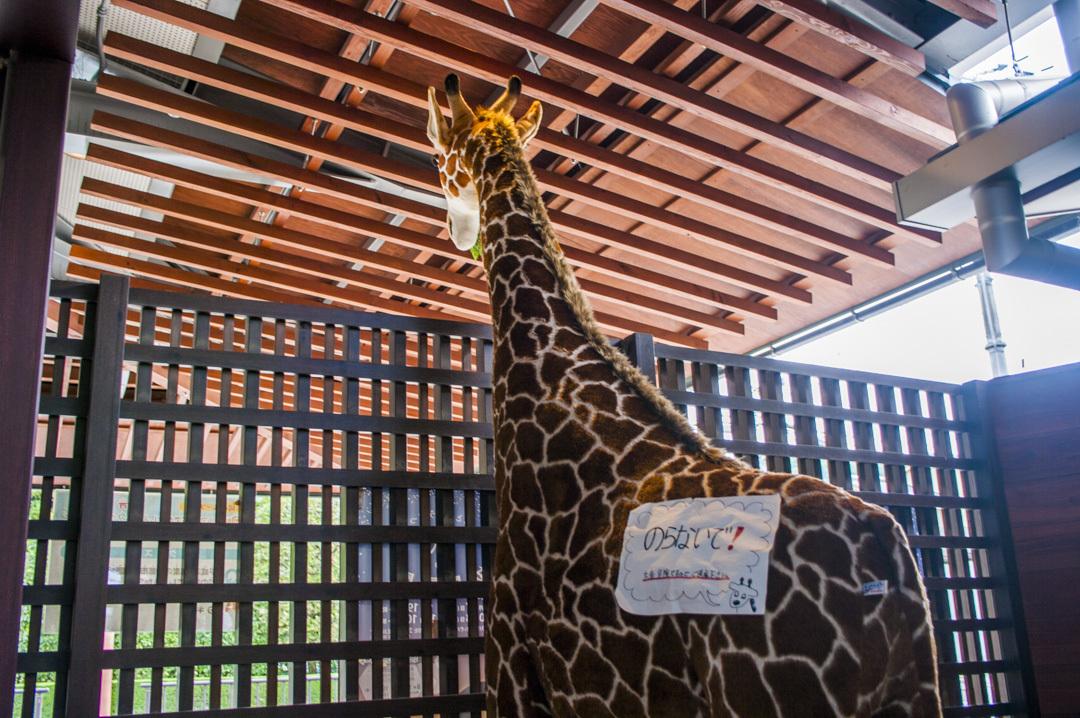 京都市動物園のエントランスのキリン