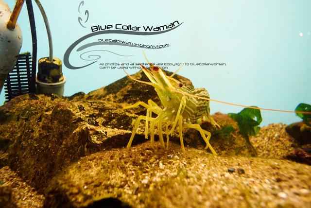 Blue_F65.jpg