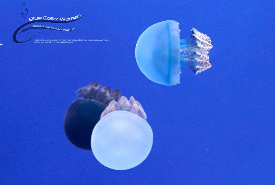 Blue_F75.jpg