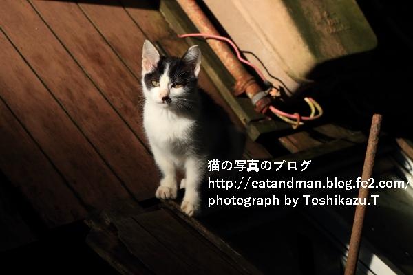 IMG_8728s.jpg