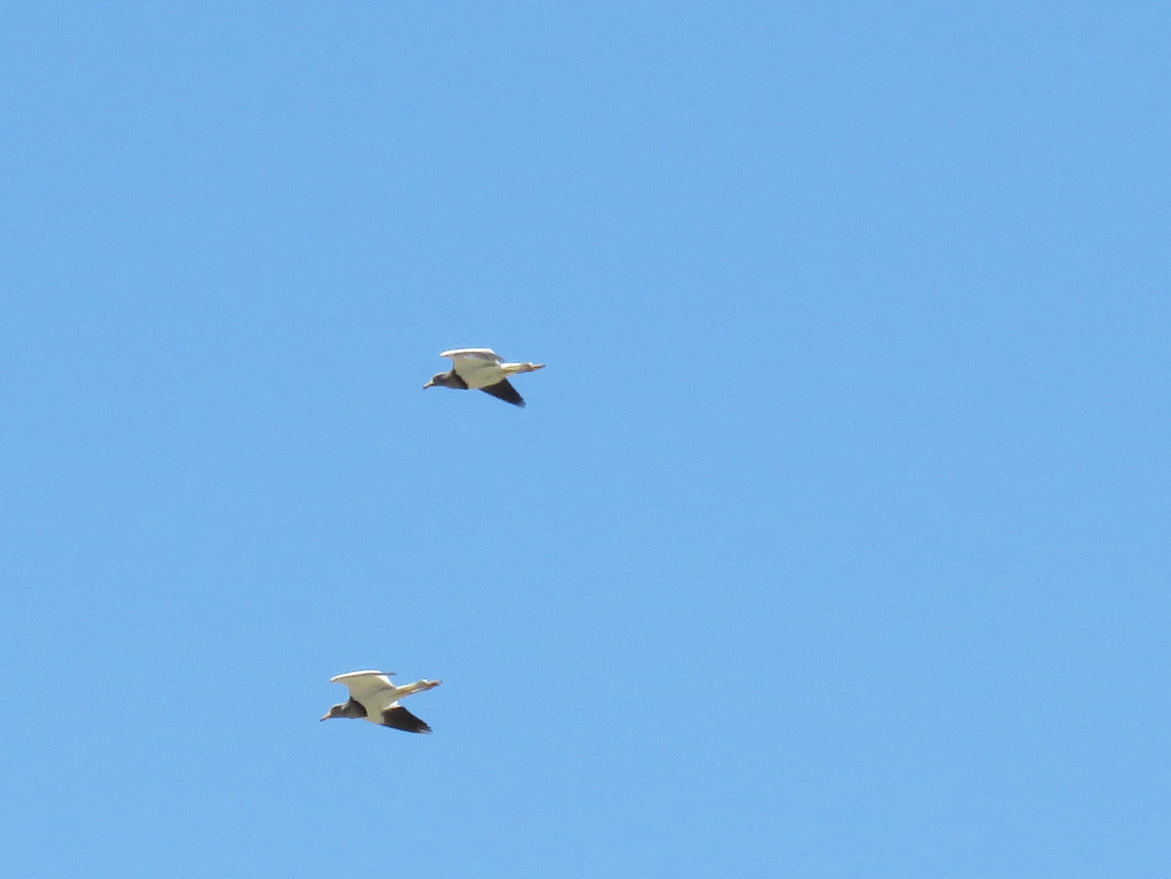 3ケリ飛翔