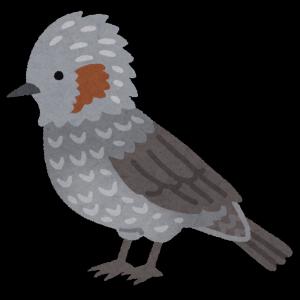 bird_hiyodori.png