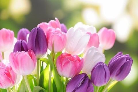 fleurs printanières スピンオフ⑤『甲斐山 亨の休日』 -聖-
