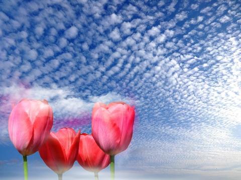 fleurs printanières スピンオフ④『時を刻む音』 -桃伽奈-