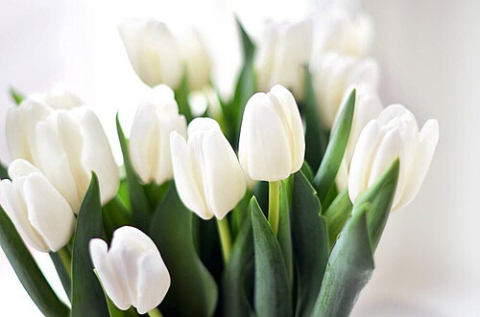 fleurs printanières スピンオフ③『公園デート』 -りおりお-