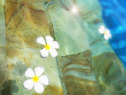 Summer Vacation ~夏の女神~ 2