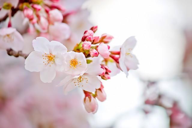 桜散る日の優しい雨・5