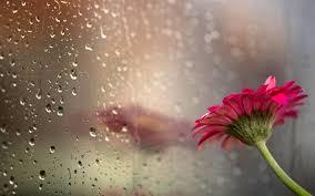雨が連れてきた恋 (6)