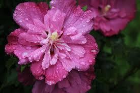 雨の降る日はそばにいて (3)