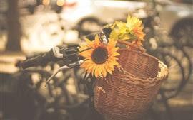 10月の向日葵 (5)