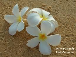 「明日咲く花」・asu様、ブログ2周年のお祝い♥