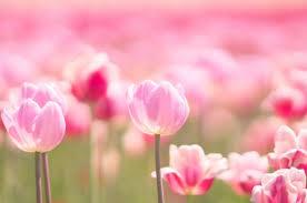 fleurs printanières スピンオフ⑧ -聖-