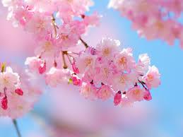 桜散る日の優しい雨・6