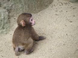 猿も木から落ちる・西門総二郎 編