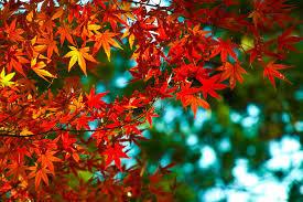 危険な紅葉狩り・6~茶と華と・秋の番外編~