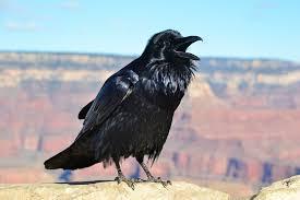 若宗匠総二郎の試練・本当にあった怖い話・黒いドレスの女
