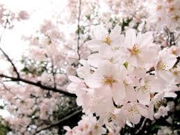 桜散る日の優しい雨・3