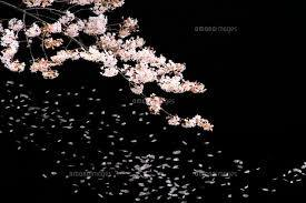 夜桜の色に魅せられて(前編)